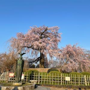 【2021年桜情報】春の京都に行ってきた!
