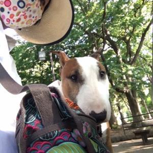 朝散歩の麦わら帽子