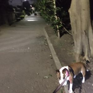 保健室だより●夜散歩はまだゆるい