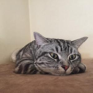 猫はすぐに太る