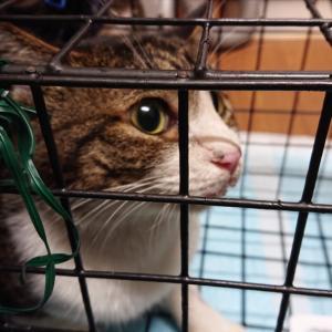 昨日はTNRのための猫の捕獲でした。
