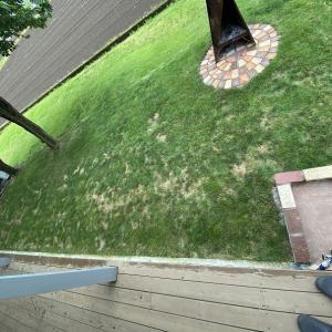 芝生の補修 西洋芝の追加種まき