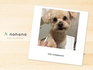 格安!250円で作れる愛犬のフォトブックを作ってみた!
