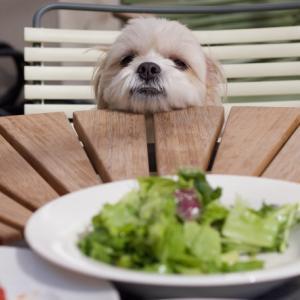 みんなどんなご飯を食べているのかを調査しました