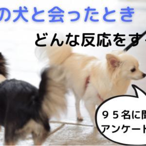 他の犬と会ったときのみんなの反応を調査