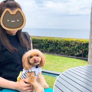 愛犬の誕生日で葉山に来ています