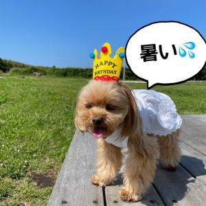葉山・逗子・三浦海岸で愛犬とレストランに行こう