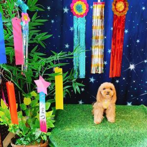 日本の「ミックス犬」事情について