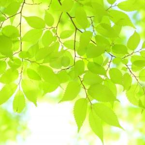 【東大リアル日記】東大の構内環境【木々と虫】
