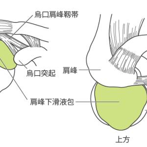 第 2 肩関節:基本情報