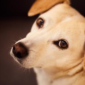 犬は飼い主に似る
