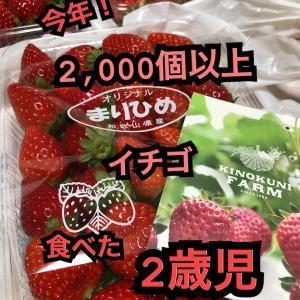 イチゴ(まりひめ)を買い続けて分かったこと