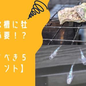 メダカ水槽に牡蠣殻は必要!?不要!?【判断すべき5つのポイント】