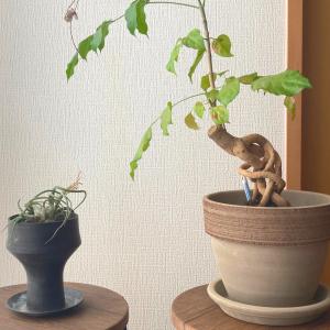 【購入品】素敵な植木鉢を見つけました。