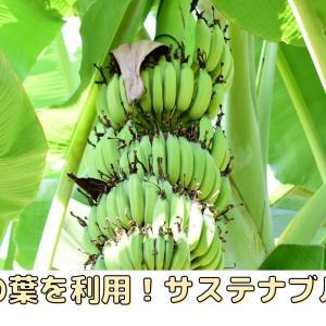 捨てられるだけのバナナの葉を利用!サステナブルな商品を紹介!