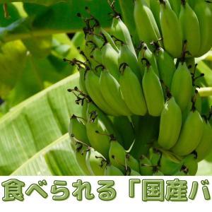 皮ごと食べられるおすすめの「国産バナナ」を厳選紹介!