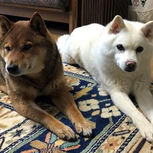 犬のしつけ教室は必要か?/しつけの方法と社会化を学ぶには効果的