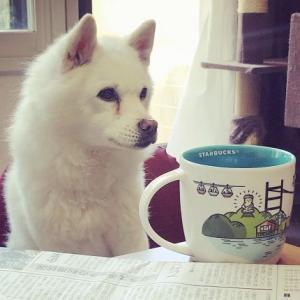 保護犬白い子ちゃんの話/保護団体からの迎え入れた野犬の子