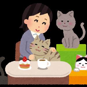 猫の通院と私の通院
