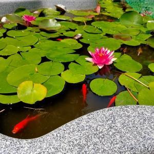 シェードの設置、池も夏仕様に