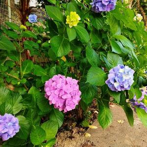 早起きした日曜の朝、花の子どもたち