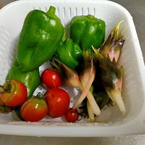 9月の庭仕事と食費のこと