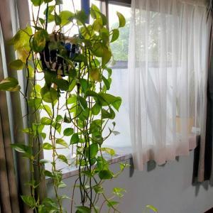 小さな秋とカーテンの洗い方