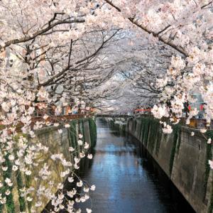 【3/21~4/4】東京2大新名所&目黒川桜のトンネル散策&2大しだれ桜観賞バスツアー