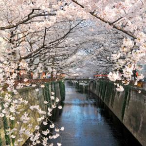 【4/5】サントリーホール特別公開とクラシックコンサート&「アークヒルズ」「目黒川桜回廊」2つの