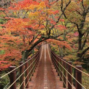 【GoToトラベル】紅葉のトンネル「花貫渓谷」&長さ日本最大級「竜神大吊橋」の紅葉&「袋田の滝」