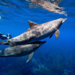 御蔵島へドルフィンスイムへ③海で泳ぐのは難しい