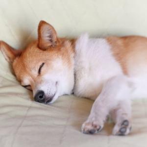 ぐっすり眠って、さわやかに起きたい。