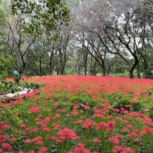 ヒガンバナ〜真っ赤な絨毯の謎〜