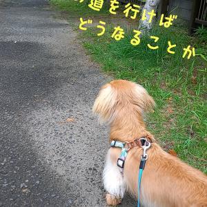 犬が吠える理由