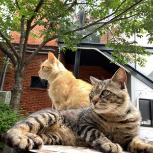 ネコに癒される日々 グラスロード猫物語その11