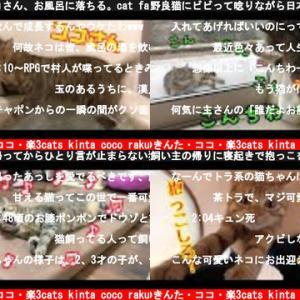 猫のきんた・ココ・楽3cats kinta coco raku(おすすめch紹介)
