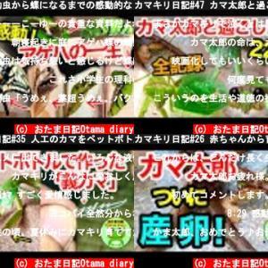 おたま日記Otama diary(おすすめch紹介)
