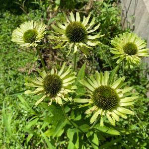 花壇ボロボロ