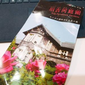 【術後】バラが咲く庭『旧古河庭園』(術後97日目)