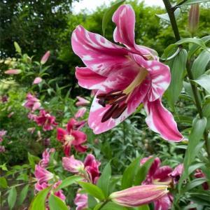 フローランテのお花