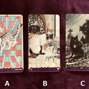 16日~22日までの週間リーディング。猫タロットから3つのメッセージ。