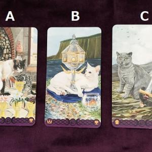 23~29日の猫タロット週間リーディング。先週と先々週引いたカードがまた出た~