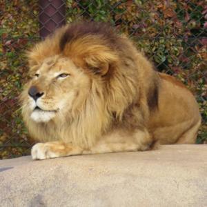 ライオンズゲートが開き始めると眠くなる?西洋占星術モニター募集についての変更も。
