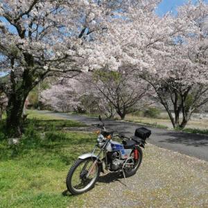 春の桜めぐりツーリング