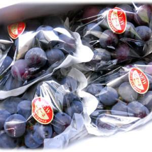 またまた秋の味覚到来(^^♪みじみずしい果汁ほとばしる爽やかなフルーツ「岡山県産 NEWピオーネ」
