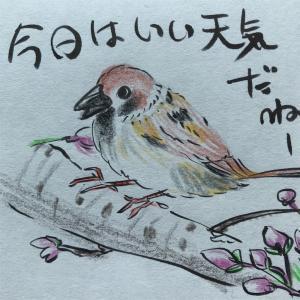 🕊気持ちの良い朝🌸桜も開花
