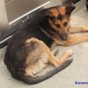 街角の犬 ギリシャの犬