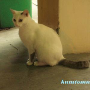 街角の猫19 セナちゃん