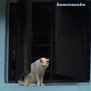 街角の猫20 気になるのね。。