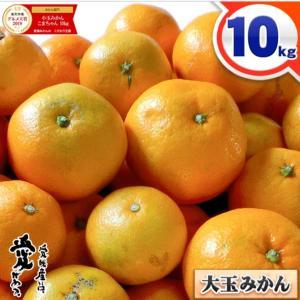 愛媛県産の大玉みかん  たっぷり10キロ!